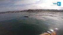 Beach Cruisers: 5 Dolphins in Laguna Beach