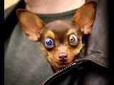 Crazy Dog Face - Crazy Dog Faces[1]