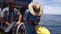 Des scientifiques ont découvert des requins vivant dans un volcan sous-marin