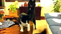 GREAT SLICING FIGHTS CATS AND DOGS