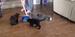 Playful Kittens Have Tonnes of Fun With a Broom