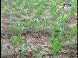 Heavy Rains Lash Himachal Pradesh, High Alert Issued