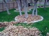 Divertido Husky siberiano jugando entre hojas