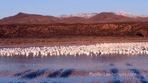 Snow Geese Flyout - Bosque del Apache National Wildlife Refuge