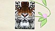 Learn About Tigers Children Will Love Learning About Tigers, Fun Tiger Facts For Kids