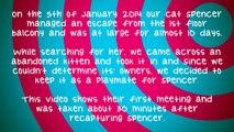 First Contact - New kitten meets established cat (Spencer & Elvis)