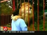Lion hugs and kisses woman