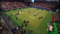 Flyball - Crufts 2007 Final