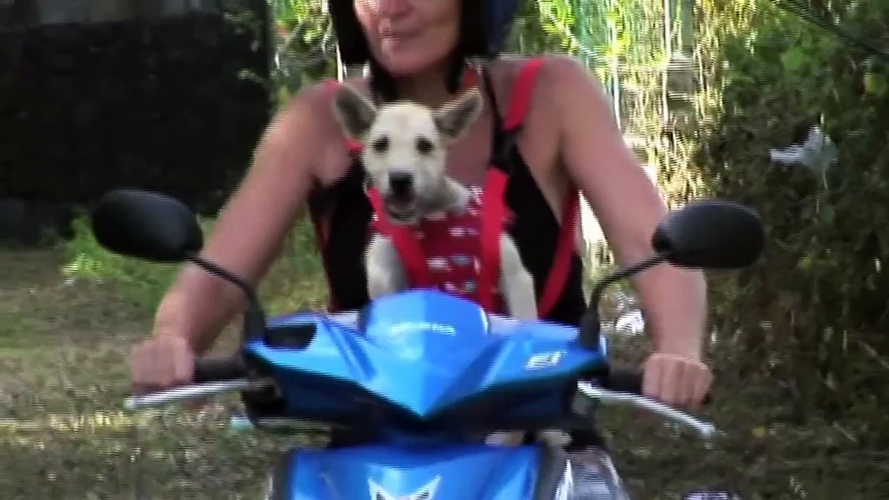 DogsLife Carrier for motorbike
