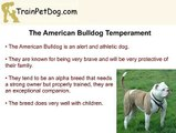 American BullDogs, English Bulldogs and French Bulldogs - How Are They Different