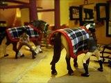Un cours avec les nouveaux chevaux [Schleich]