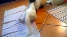 Top Cat Videos - Epic Cat Fight - Real Cat Fight - Funny Cat Fight