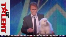 Top 10 got Talent Auditions 2015 - The talking dog Wendy wow the judges, very funny.