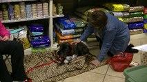 Pet Adoption Events by Gateway Pet Guardians