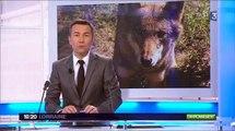 Reportage sur la présence du loup dans les Vosges au JT 19/20 de France 3 Lorraine