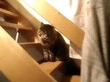 (30-07-2009) - 03 - Hugo le chat géant 02