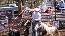 POLE BENDING, BARREL RACING, & HEAD HORSE FOR SALE