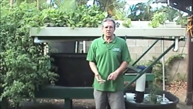Aquaponics in Hawaii – Economical Cinder Bed System