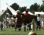 new horse stunts 2006