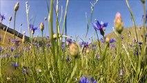 GOPRO HD 2 Monti Sibillini: fioritura Castelluccio di Norcia 2013