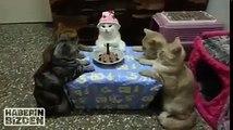 Cats Happy Birthday party
