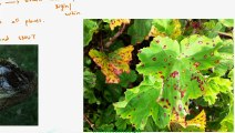 FSc Biology Book1, CH 8, LEC 8; Losses Due to Fungi