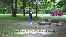 Good 5-Day Dog Training Seminar in Alexandria, Virginia! 3-Year Old Lab! Amazing Dog Training New