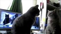 Talking Cats Play Pattycake Videos _ Funny Animals Compilation _ Funny cat videos-copypasteads.com