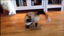 TOP Funniest Cats Compilation 2015 Funny Cats Humour Cats Best Cats Cat Fails Video1