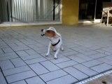 Dog Barking Like Crazy