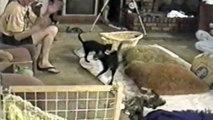 Kedilerin Korku Dolu Anları