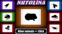 Guinea pig sounds - Guinea pig sound effect - Guinea pig noises