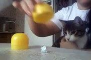 Super Intelligent Cat   Funny Cats  Funny Videos