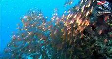 Diving the Red Sea. Scuba video of Egypt's best dive sites with dolphins, whale sharks, mantas