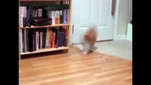Funny Cats Compilation  Funny Cat Videos Ever  Funny Cat Vines 2015   Funniest cats video ever