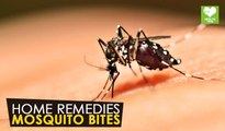 Mosquito Bites - Home Remedies | Health Tips