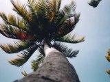 Sous les cocotiers : Plage - Outre Mer