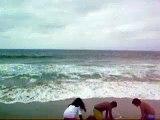 The Dolphins at Redondo Beach