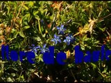le col de l'iséran rhone-alpes (france)