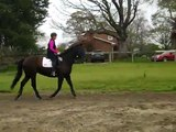 Contact. On the bit at the canter. Nervous hot horse. 2nd time!  S4 dressage training