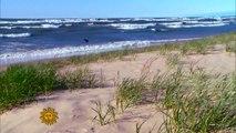 Nature: Indiana Dunes