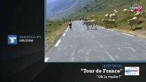 Zapping TV : un troupeau de vaches coupe la route du Tour de France