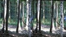 """Deers 3D at the """"Espace Rambouillet"""", France / Cerfs en 3D Espace Rambouillet"""