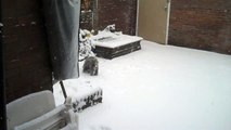onze hond lekker aan het spelen in de sneeuw  2010