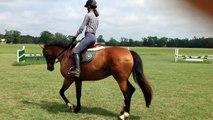 Lola   Irish Sport Horse for Sale