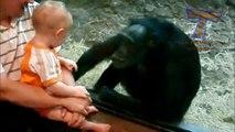 animaux mignons embrasser les bébés  drôle danimal