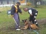 Cesar LPN-Malinois-K9-Police Dogs-NVBK - french ring-mondio ring -