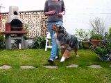 Dog dancing oberythmée / Australian Shepherd