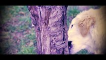 Canon 550d Golden Retriver Puppy eat tree bark and grass
