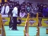 Dog Agility (Mar/31/07 JKC CUP Jumping Large Vol.3)